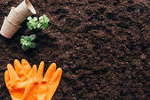 Photo top view of green plants, empty flower pots and rubber gloves on soil
