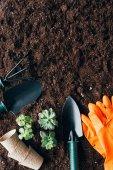 a talaj a zöld növények, kerti szerszámok, Virágcserepek és gumikesztyűt felülnézet