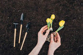 Photo partial view of person planting beautiful green flowers in soil and small gardening tools on ground