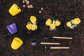 pohled shora na žluté květy rostoucí v půdě, zahrádkářských potřeb a květináče na zem