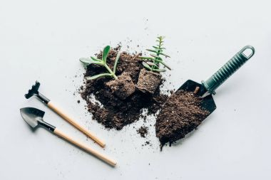 top view of green plants in ground, gardening tools and soil on grey