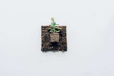 top view of beautiful green plant in soil on grey