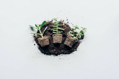 top view of beautiful green plants in soil on grey