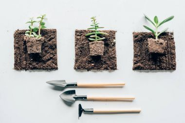 top view of beautiful green plants in soil and gardening tools on grey