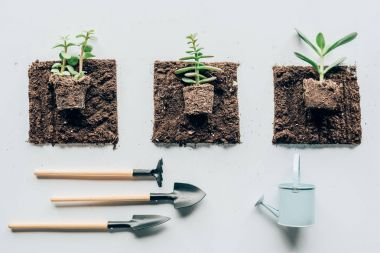 top view of beautiful green plants in soil, gardening tools and watering can on grey