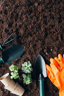 top view of green plants, gardening tools, flower pots and rubber gloves on soil