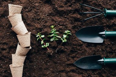 top view of green plants with roots, empty pots and gardening tools on soil