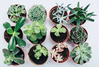 top view of beautiful green succulents plants in pots on grey