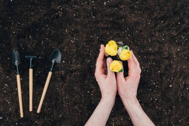 cropped shot of human hands planting beautiful green flowers in soil and small gardening tools on ground