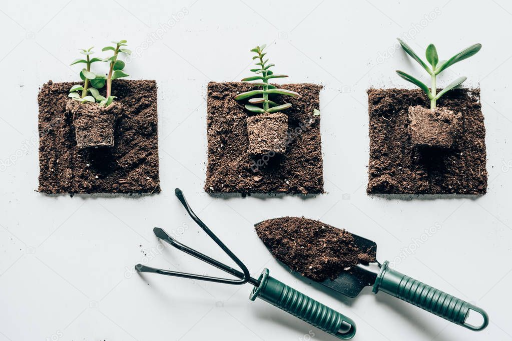 top view of beautiful green plants in ground and gardening tools on grey