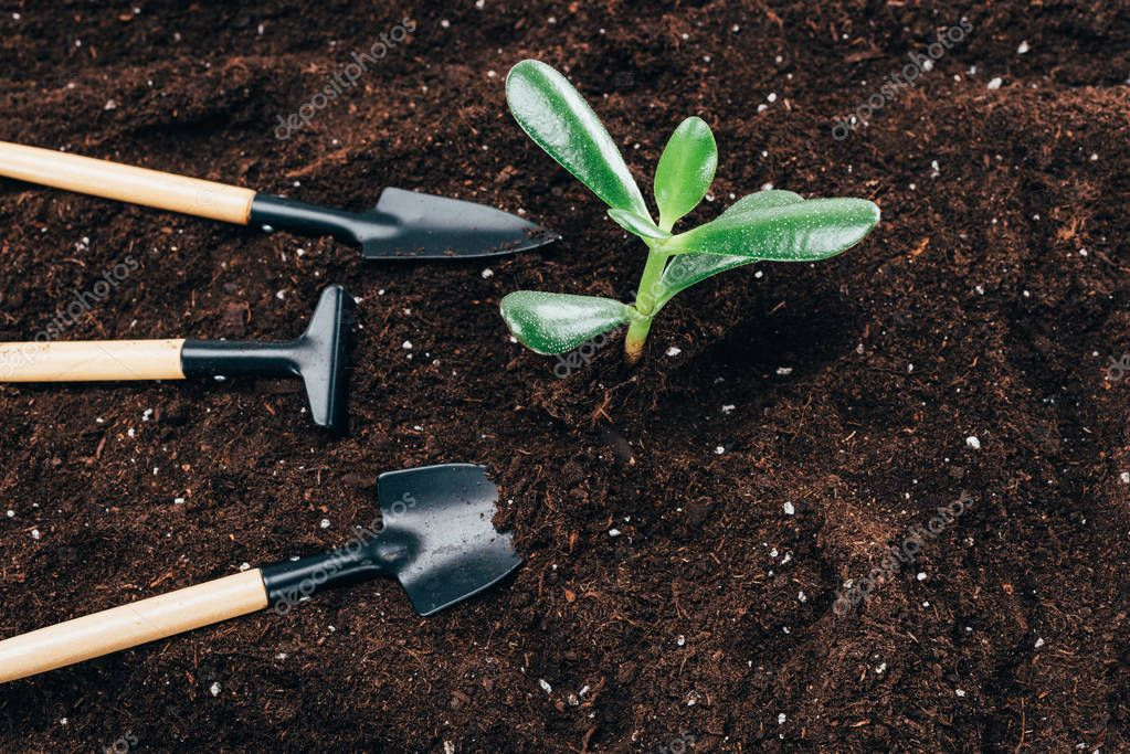 close-up view of beautiful green plants and gardening tools on soil