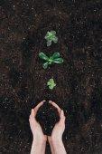 oříznutý snímek držitele půdy a krásné zelené rostliny rostoucí v půdě