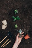 Photo cropped shot of human hand holding beautiful green plant in ground