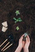 částečný pohled shora osoby držící krásných zelených rostlin v půdě