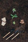 Fotografie pohled shora krásných zelených rostlin v půdě, květináče a zahradní nářadí