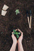 Photo cropped shot of person holding beautiful green plant in soil