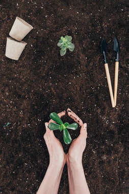 cropped shot of person holding beautiful green plant in soil