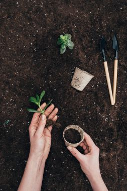 partial view of hands holding green plant and flower pot above ground with gardening tools