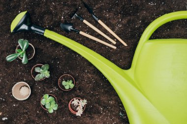 top view of beautiful green potted plants, gardening tools and big plastic watering can on soil