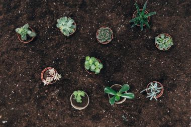 top view of beautiful green potted plants on ground
