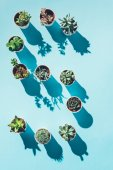 top view of letter S made from green potted plants on blue