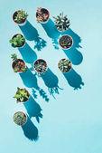készült kék-zöld cserepes növények P betű felső nézetében