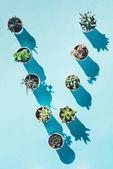 Fotografia vista superiore della lettera V fatta dalle piante verdi in vaso sullazzurro
