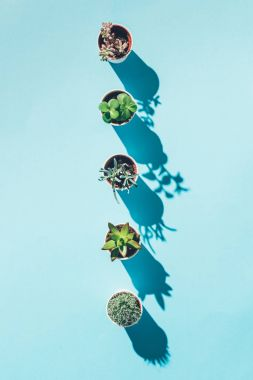 top view of letter I made from green potted plants on blue