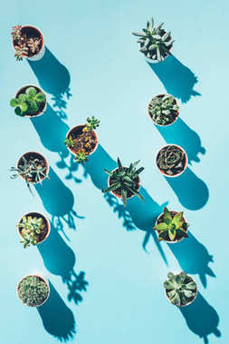top view of letter N made from green potted plants on blue