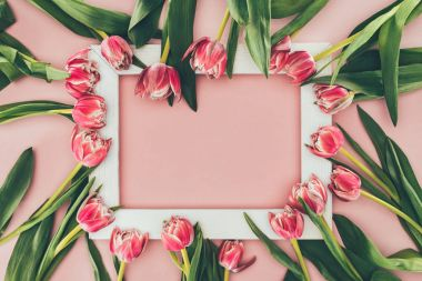 beautiful pink tulips with green leaves and empty white frame on pink
