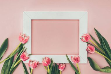 beautiful pink tulip flowers and empty white frame on pink
