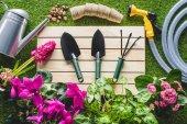 felülnézet kerti berendezések és a virágok, a fű