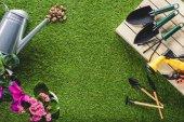 pohled shora uspořádány sluníčka a květin na trávě