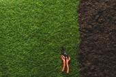 felülnézet zöld gyep és a talaj-val metszőolló