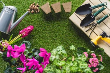 top view of flowers and arranged gardening equipment on grass