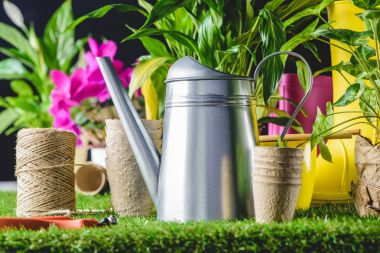 closeup view of secateurs, watering can and flower pots on lawn