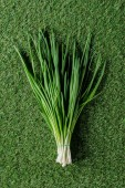 top view of green onion on grass, healthy eating concept
