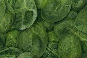 Fotografie plnoformátový pohled krásné vlhké zelené listy, květinové pozadí