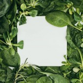 Fotografie top view of blank white card and beautiful fresh green leaves and plants