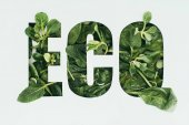 Fotografie word eco made from fresh green leaves isolated on grey