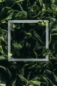 Fotografie čtvercové bílé rámu a tmavě zelené listy, květinové pozadí