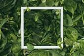 quadratischer weißer Rahmen und schöne frische grüne Blätter mit Tautropfen, blumiger Hintergrund