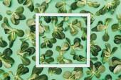pohled shora bílý rámeek a krásné čerstvé zelené listy na zelené