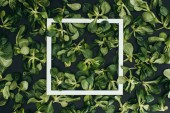 top view of white square frame and beautiful fresh green leaves