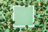 Fotografie leeren weißen Rahmen und frische grüne Blätter auf grün