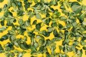 vista superiore del modello fatto da insalata di mais verde bella lascia il giallo