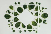 Fotografie top view of beautiful fresh green leaves, white square and rhombus with copy space on grey