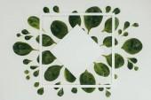 Fotografie pohled shora krásné čerstvé zelené listy, bílé náměstí a kosočtverec s kopií prostoru na grey