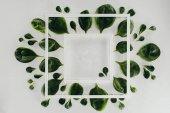 pohled shora bílé čtvercové rámečky a krásné čerstvé zelené listy na grey