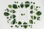 pohled shora bílé čtvercové rámečky a čerstvý zelený špenát listy Grey